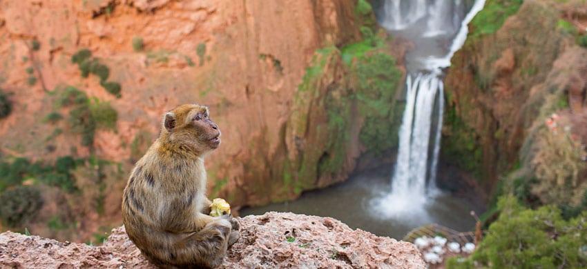 Itinerario dei parchi nazionali